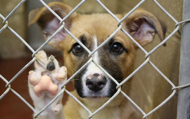 Dog for Dog is Trying to Feed as Many Shelter Dogs as Possible