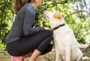 Dog Safety: This Is Why Your Dog Needs a GPS Tracker