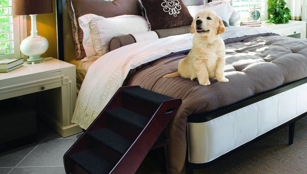 How to Choose Correct Dog Ramps or Stairs for Your Pet