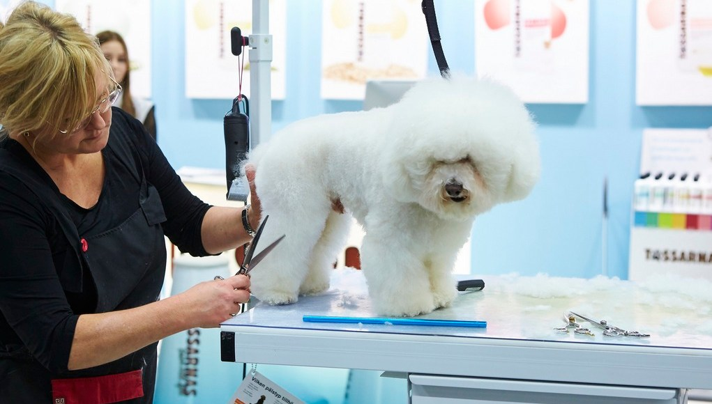 How to Start a Dog Grooming Business