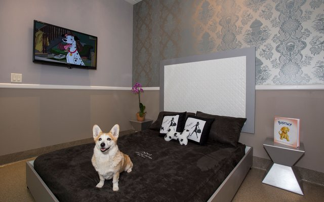 Pets Can Enjoy the Suite life in West Palm Beach