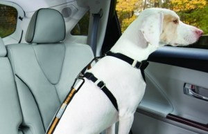 Subaru of America and the Center for Pet Safety Team Up