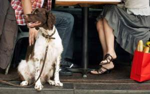 The Double Wide Grill in Pittsburgh Serves Canine Companions Too