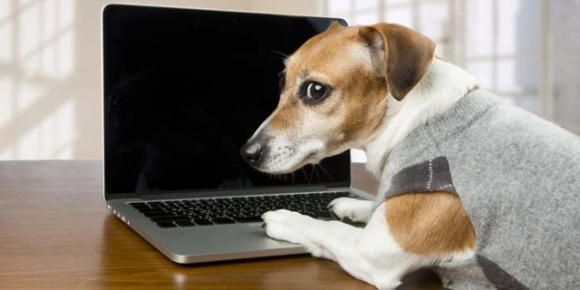 dog looking through dogs supplies websites