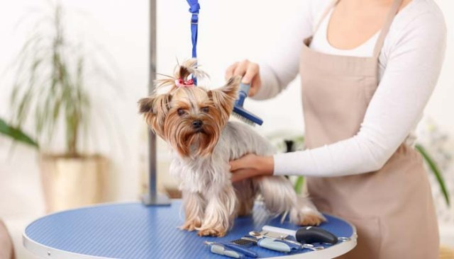 ways to becoming a groomer of dogs