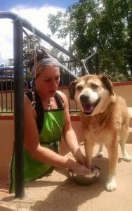 An Open-Air Dog Spa Opens in Arizonia