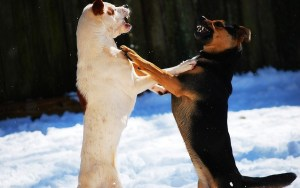 How to Deal With Dog Aggression Without Training Collars