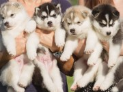 How to Start a Dog Breeding Business 101 - Best Actionable Tips