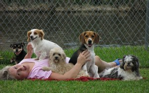How to Write a Dog Daycare Business Plan