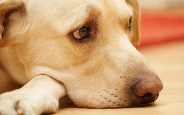 Two More Dog Foods Being Recalled for Possible Salmonella Contamination