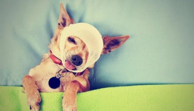 Best Pet Business Insurance Plans for Dog