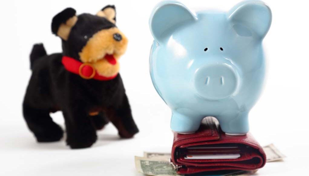 Best Pet Business Insurance Plans