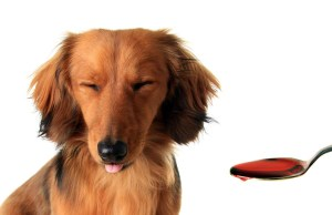 Best Vet Recommended Supplements for Dogs
