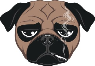 Business and Use of Cannabis in the US Pet Industry What's the Word
