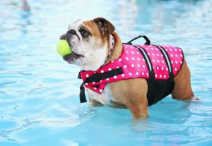 Dogs in Pools - Why Swimming is Good for Your Pet