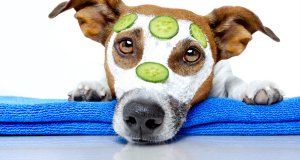 How to Calm Your Dog Before Grooming