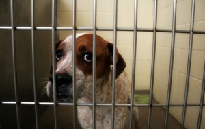 Law Says Animals Sold in Phoenix Pet Stores Must Come From Shelters and Rescues
