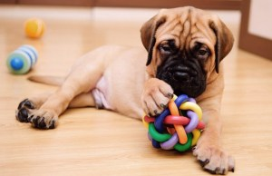 Pet Superstore Website Launched Last Week