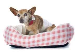 Proper Bedding for senior dogs