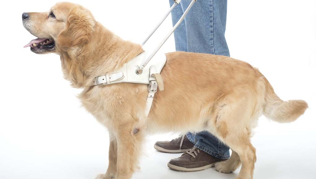 Service Dogs - What You Need to Know