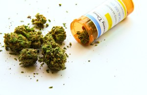 Use of Cannabis in the US Pet Industry