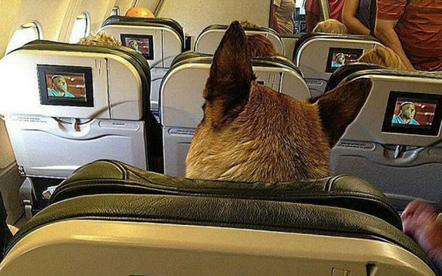Woman Kicked Off Plane For Not Putting Her Pet in a Carrier