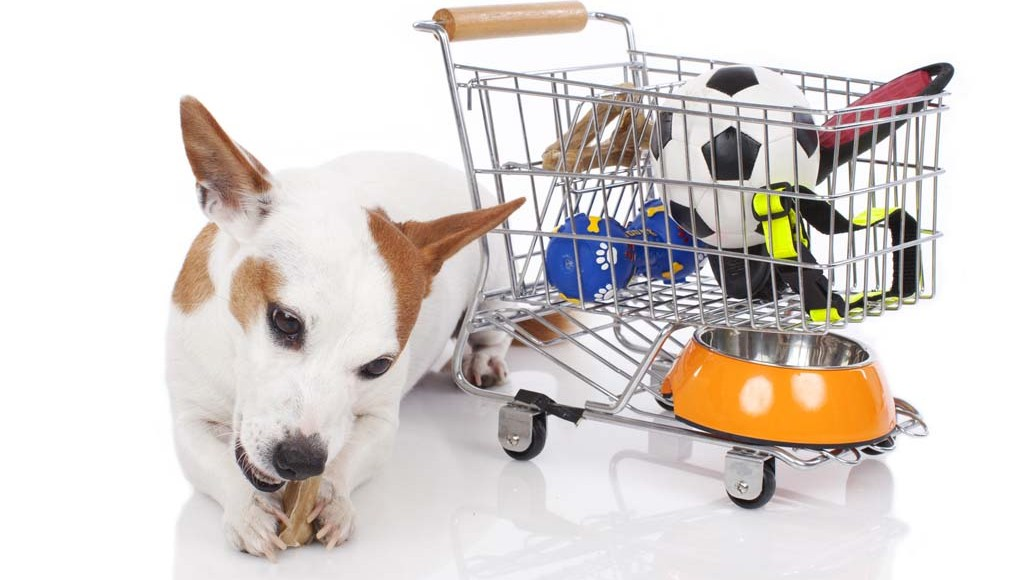Types of Dog Supplies to Buy in Bulk