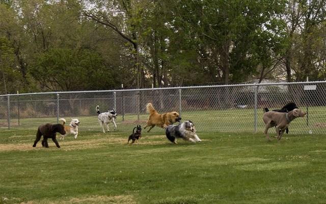 Arthritis Trouble Sparks Retirees Idea for A Dog Park in Toledo, Ohio