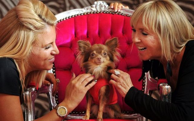 Barking Mad The Welsh Dog Spa Debuts on BBC One Wales