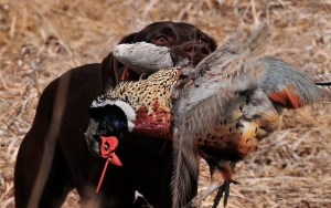 Breaking Scents for Hunting Dogs - Every Hunter's Favorite Tool