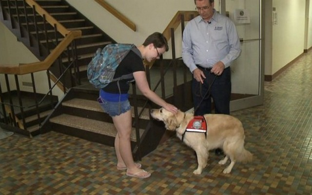 Concordia University Now Has a Comfort Dog on Campus