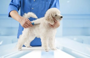 Dog Grooming 101 - Becoming a Professional Pet Groomer