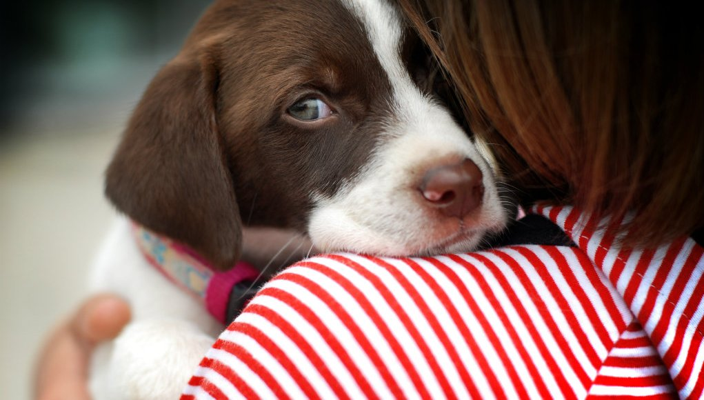 How Owners Lose Their Dogs' Trust