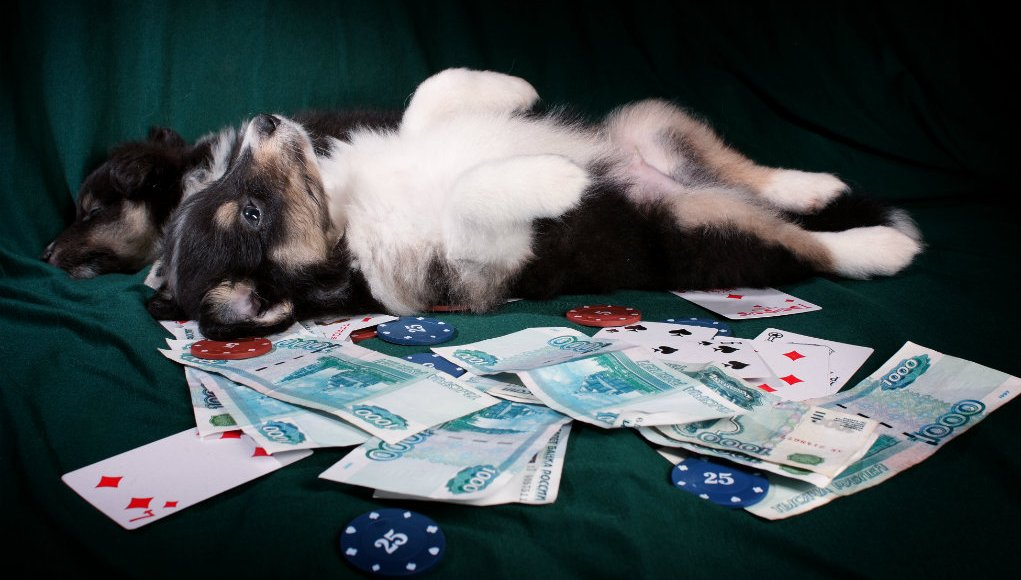 Is Your Dog a Gambling Addict