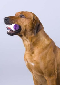 Most popular dog supplements for pets
