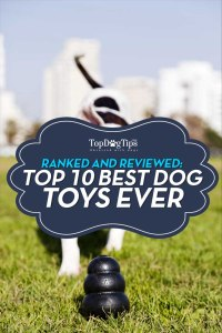 Top 10 - What Is the Best Dog Toy
