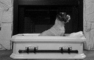 Top 5 Best Dog Caskets for Burial 2020