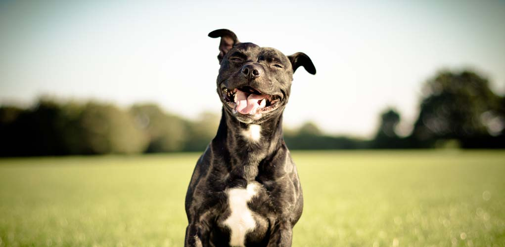 Dogs LOVE to Smile. A lot.