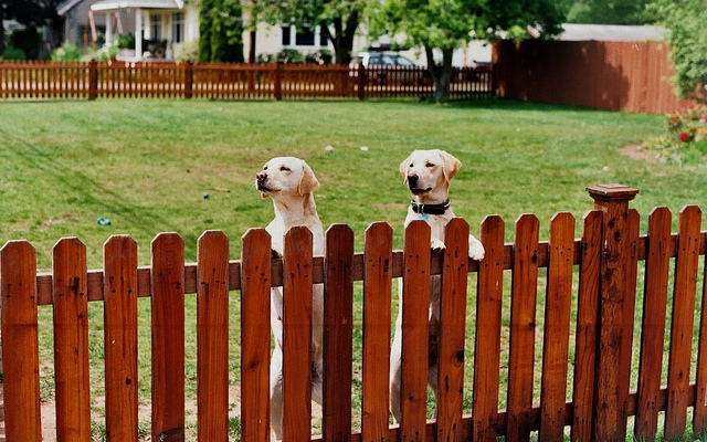When Dog Fences Are Absolutely Necessary