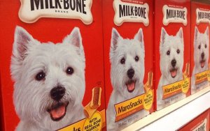 Why and Where to Shop for Wholesale Pet Supplies