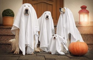 110 Coolest Dog Halloween Costumes
