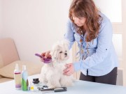 Are Dog Grooming Schools Worth It