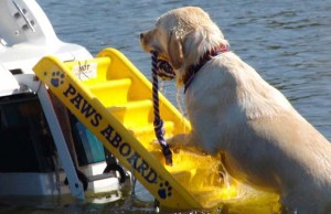Best Dog Ramps for Water