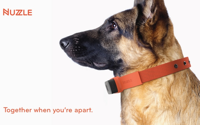 Is This Wearable the iPod of Pet Insurance
