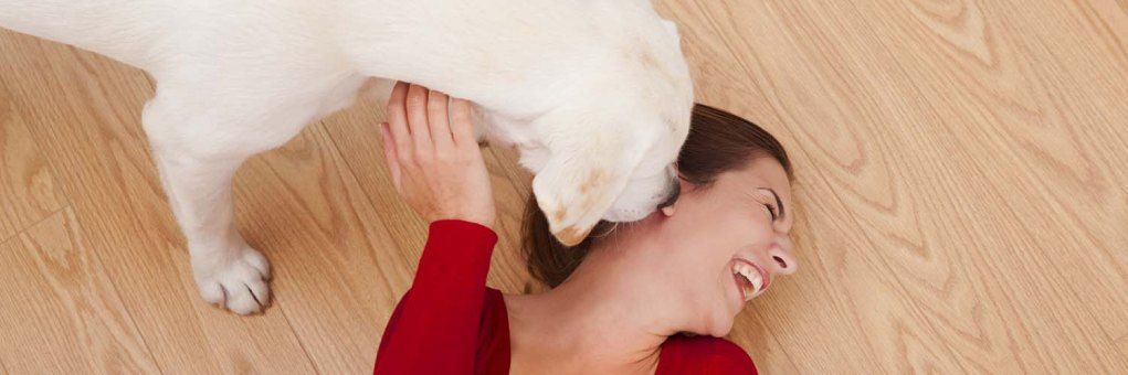 Scientifically Proven Cases Where Dogs are Better than Doctors