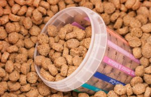 What Ingredients Should You Look For in Dog Food?