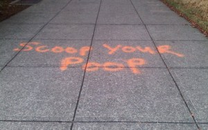 What's Up With All The Orange Dog Poop