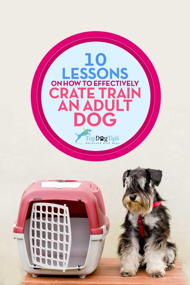Best Lessons on Effectively Crate Training Adult Dog