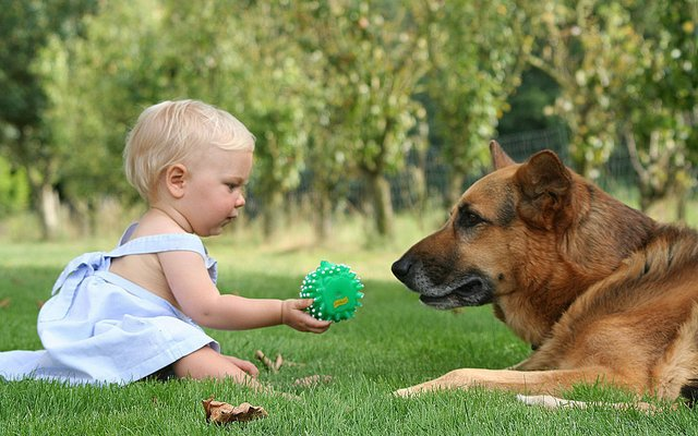 Does Growing Up With a Dog Reduce A Child's Risk of Developing Asthma