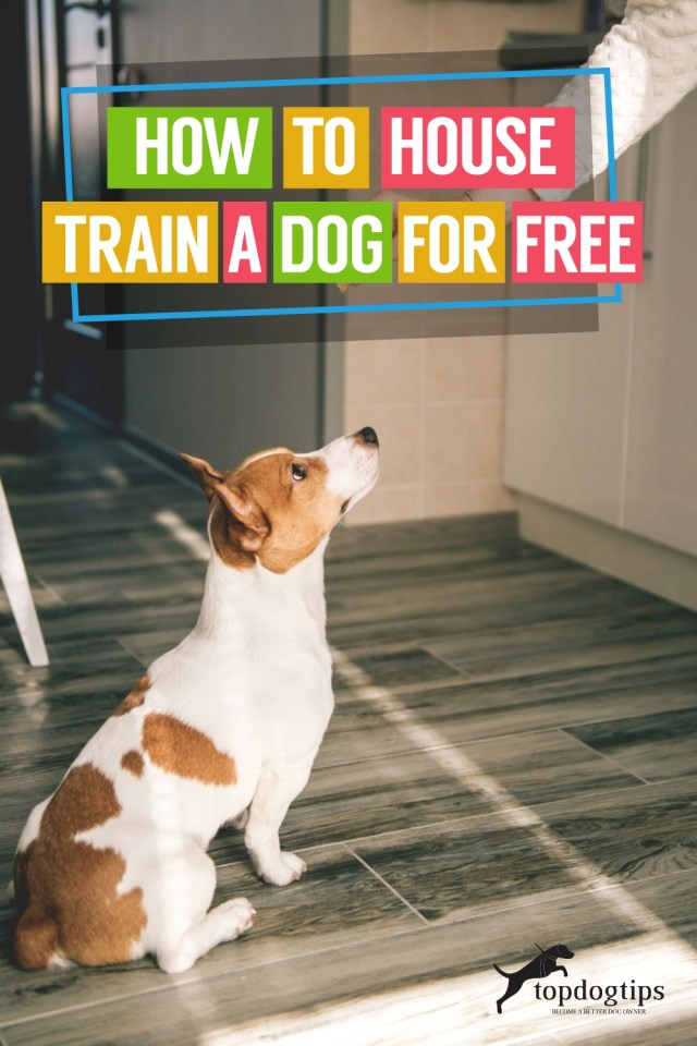 How to House Train a Dog for Free